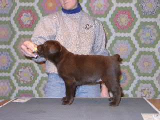 picturegallery140003.tmp/puppy3stack.JPG